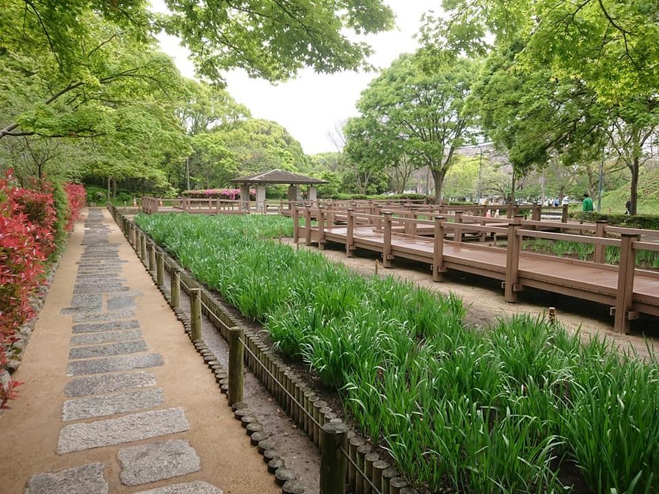 舞鶴公園ショウブ園